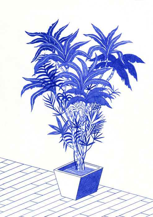 http://kevinlucbert.com/files/gimgs/70_plante2_v2.jpg